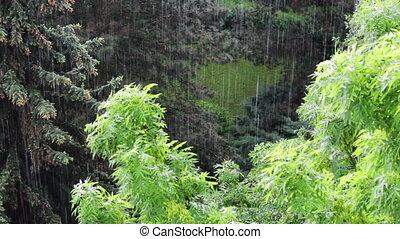 couronne, pluie, lourd, arbre