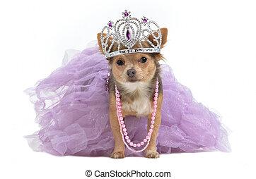 couronne royale, chien