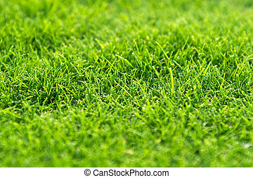 cours, herbe, golf, macro