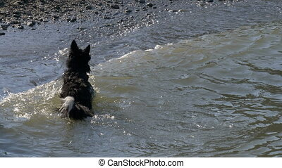 course, eau, chien, jeu