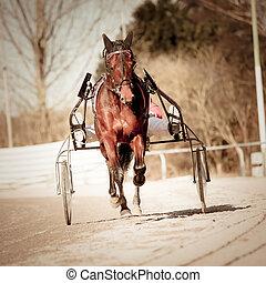 course harnais, .horse