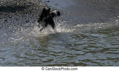 course, jeu, eau, chien