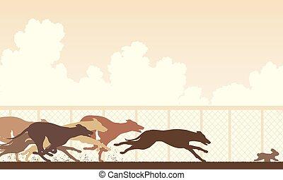 course, lévrier, chien