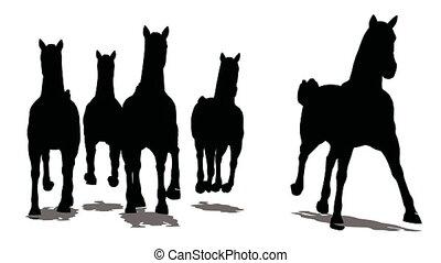 course, troupeau, devant, arrière-plan noir, vue, chevaux, blanc, silhouette