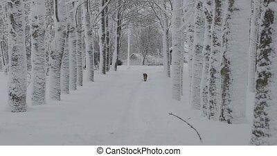 courses, hiver, errant, loin, chien, long, route