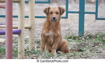 courtyard red homeless dog sitting on the ground puppy -...