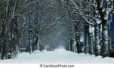 couvert, avenue, neige, beautifully