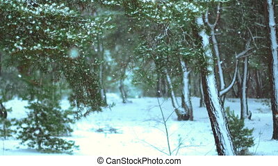 couvert, bois, hiver, neige