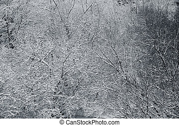 couvert, branchs, hiver, neige