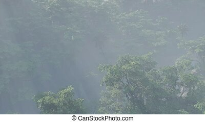 couvert, brouillard, jungle, rainforest, paysage