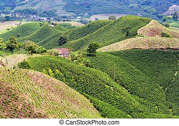 couvert, café, collines