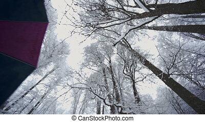 couvert, forêt, arbres, neige