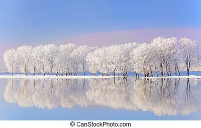 couvert, gelée, arbres hiver