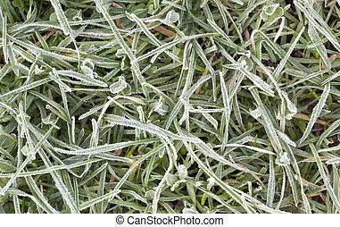 couvert, gelée, herbe