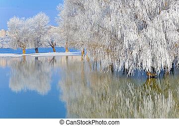 couvert, gelée, hiver, Arbres