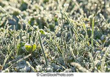 couvert, herbe, pré vert, neige