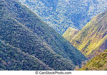 couvert, jungle, collines