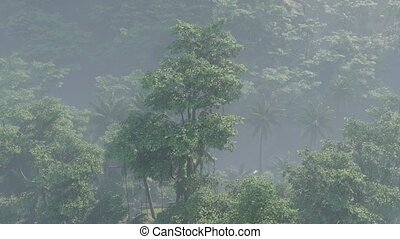couvert, jungle, paysage, rainforest, brouillard