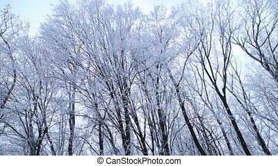 couvert, neige, arbres