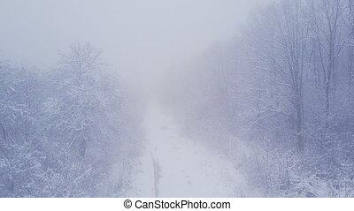 couvert, neige, arbres