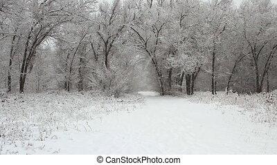 couvert, parc, arbres hiver, neige