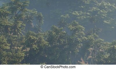 couvert, paysage, brouillard, jungle, rainforest