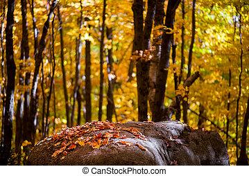 couvert, pierre, feuilles, forêt