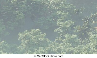 couvert, rainforest, jungle, paysage, brouillard