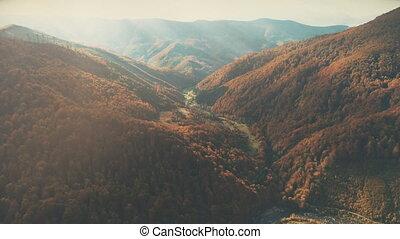couverture, dense, soleil, vallonné, lit, brun, paysage, automne, forêts