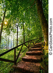 Covadonga forest stairs in Asturias Picos Europa mountains...
