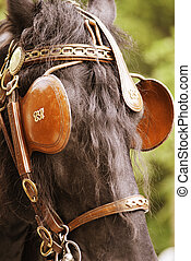 Covered Eyes of a Horse