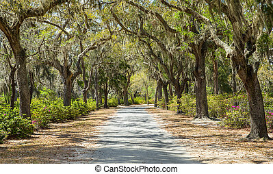 Covered Rural Road in the American South