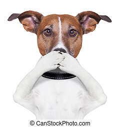 covering mouth dog  - covering the mouth dog with paws