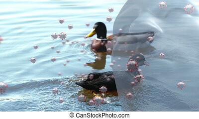 Covid-19 cells and human head model against ducks swimming ...
