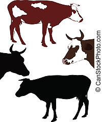 Cow a calf animals