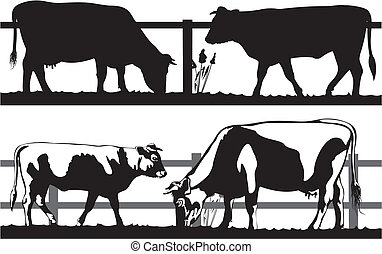 black and white cattle on the meadow - silhouettes