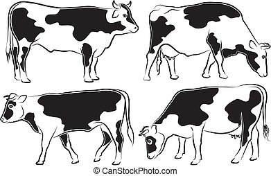 cow and bull - outlines - black and white cattle, grazing ...