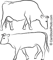 cow and bull - outlines - farm animals, black and white ...