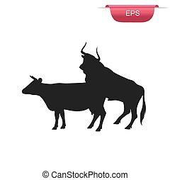 cow and bull sex, farm animals