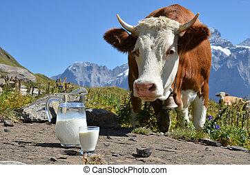 Cow and jug of milk. Jungfrau region, Switzerland