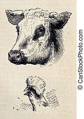 Cow and rooster - Antique illustrations of cow and rooster ...