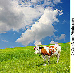 Cow and the ecological environment