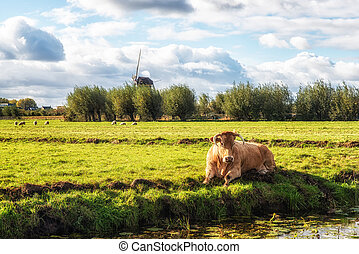 Cow and Windmill
