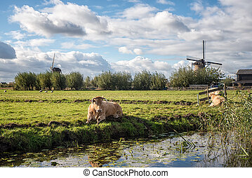 Cow and Windmill - Landscape with windmill and cow in...