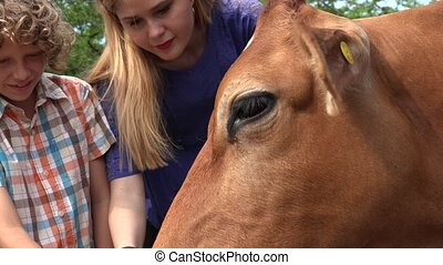 Cow At Cattle Farm