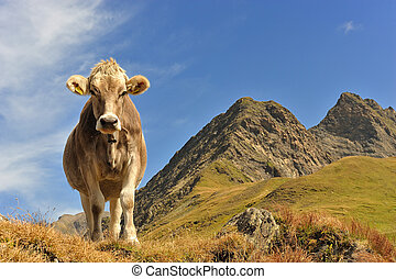 Cow at the feet of the mountains in Switzerland