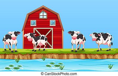 Cow at the rural farm