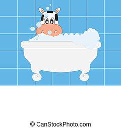 cow bathing. blue card