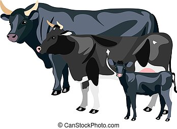 Cow Calf and Bull isolated