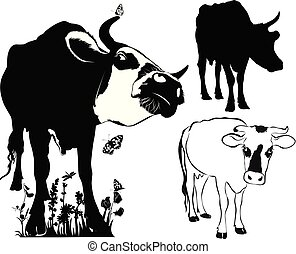cow collection isolated on white background